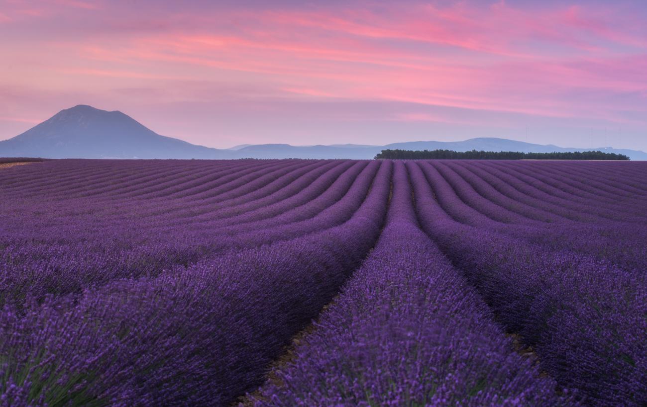 Provence – lavender fields | Daniel Kordan: danielkordan.com/portfolio/provence-lavender-fields