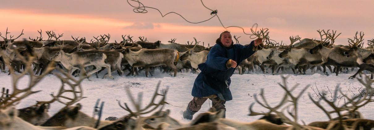 Reindeer_breeder_6